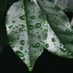 Collecting Rainwater in Your Landscaping