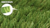 imperial-fescue-light